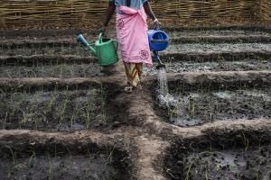 Yaya Balde tiene 60 años y reside en Ga Santim, un pueblo situado en la región de Bafatá, al norte de Guinea Bissau. Está casada con Umaru Balde, de 76 años, que practica la poligamia y tiene una segunda esposa, Uma Djou. Yaya ha tenido nueve hijos, de los que viven cinco. En la aldea, las condiciones de vida son muy humildes: la alimentación está basada principalmente en el arroz y los chamizos no disponen de agua corriente o luz eléctrica. Yaya se levanta a las cinco de la mañana y, después de la higiene personal, hace el primer rezo musulmán del día. Después ocupa toda su jornada en diferentes labores.  En África, las mujeres soportan la mayor parte de los trabajos. Ellas se encargan de todas las tareas domésticas, entre las que se incluyen recoger leña en el bosque, dar de comer a los animales, sacar agua en el pozo, moler el cereal de manera tradicional, cuidar de los niños, hacer la comida y mantener limpias las casas. 25 enero 2014. (c) Pedro ARMESTRE Yaya Balde is 60 years old and lives in Ga Santim, a small town in the north of Guinea Bissau. She is married with 76-year-old Umaru Balde, who practises the poligamy and has a second wife, Uma Djou. Yaya has had nine children, of whom five are alive. In the village, the living conditions are very humble: the supply is based principally on the rice and the houses don´t have current water or electrical light. Yaya gets up at five o'clock in the morning and, after the personal hygiene, does the first muslim prayer of the day. Later, she occupies all her day in different labors. In Africa, the women support most of the works. They take charge of all the domestic tasks: to gather fuelwood in the forest, to feed to the animals, to extract water in the well, to grind the cereal of a traditional way, to take care of the children, to do the food and to keep the houses clean. 25 enero 2014. (c) Pedro ARMESTRE